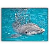 16 Geburtstagskarten (16er Set): Glücks Tier Foto Grußkarte mit schwimmenden Delfin