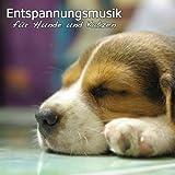 Entspannungsmusik für Hunde und Katzen