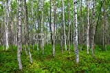 Leinwand-Bild 120 x 80 cm: