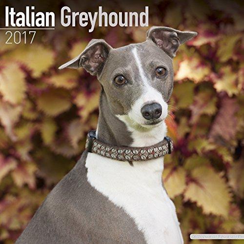 italian-greyhound-calendar-2017