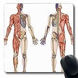 Luancrop Mousepads Knochensystem Anatomischer Körper Menschliches Skelett Anatomie Didaktische Skelettforschung Hip Leg Modell Acromion rutschfeste Gaming-Mausunterlage Gummi-Matte
