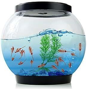 Led temps de cancer verre aquarium poisson rouge avec for Quel temperature pour aquarium poisson rouge