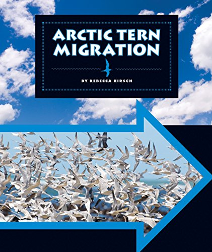 Arctic Tern Migration (Animal Migrations)