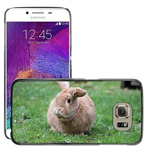 Nur Handy HOT STYLE HANDY PC Hard Case Cover//m00139288Kaninchen Bunny Animal Cute Furry Pet//Samsung Galaxy S6(passt nicht für (Passt Bunny)