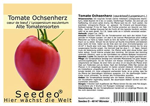 Tomate Ochsenherz (Cuor di bue) (Lycopersicum L.) 25 Samen Reinsaat
