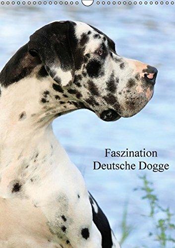 Faszination Deutsche Dogge (Wandkalender 2017 DIN A3 hoch): Die Deutsche Dogge ist trotz ihrer imposanten Größe sehr sensibel, anhänglich und ein ... (Monatskalender, 14 Seiten) (CALVENDO Tiere) (Harlekin Dogge)