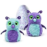 Hatchimals - Hatching Egg - Interactive Creature - Burtle - Purple/Teal Egg by Spin Master by Hatchimals