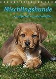 Mischlingshunde (Tischkalender 2019 DIN A5 hoch): Ein Kalender für den Tierschutz (Monatskalender, 14 Seiten ) (CALVENDO Tiere)