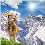 Wallario Magnet für Kühlschrank/Geschirrspüler, magnetisch haftende Folie - 60 x 60 cm, Motiv: Kuh im Sonnenschein in Den Alpen
