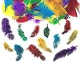 Kids B Crafty 500 plumas de colores surtidas y plumas con lunares para collage y disfraz de collage