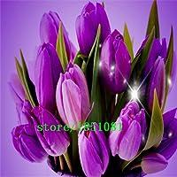 Green Seeds Co. 100 unids/Lote, Flor Artificial Real Tacto PU tulipán Escritorio Regalo de decoración del hogar de la Boda púrpura