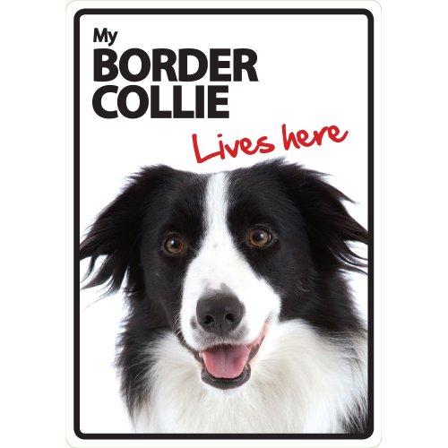 border-collie-lives-here