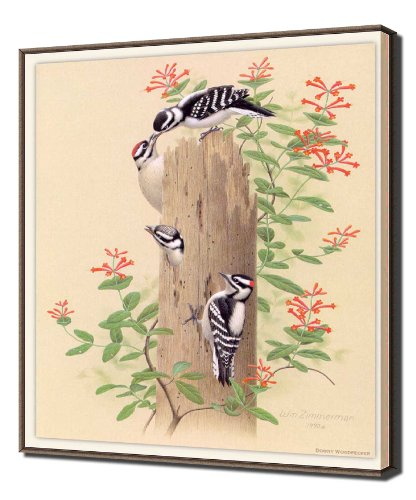 william-zimmerman-downy-woodpecker-art-reproduction-on-canvas-a-high-quality-canvas-art-print