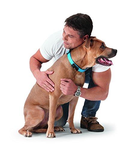 Petpointer - kleinster GPS Tracker für Tiere (Hund, Katze, Pferd, etc.) / ultimativer Schutz für Ihr Haustier / inkl. App für Ihr - Für Gerät Tiere Tracking