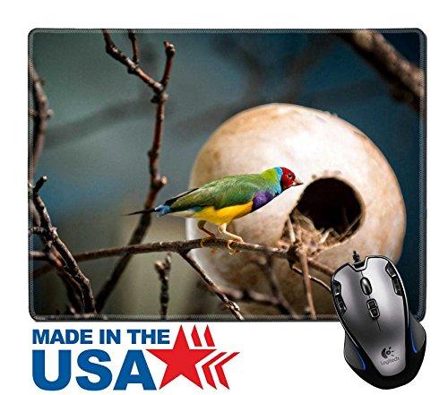 MSD Naturkautschuk Maus Pad/Matte mit genähte Kanten 9,8x 7,9Bild-ID 35652569die sehr bunte Gouldamadine ist auch bekannt in Amerika wie der Regenbogen Finch Gould -