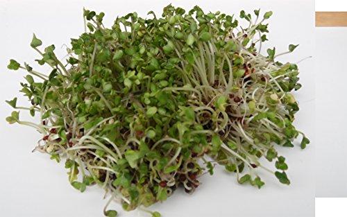 BIO Keimsprossen Brokkoli Raab Brokkoletti Samen zur Sprossenzucht Sprossen Microgreen Mikrogrün