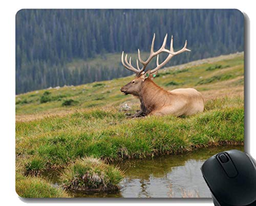 Gaming Mouse Pad Design, Deer, Rocky Mountains, USA - Genähte Kanten