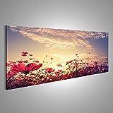 islandburner Bild Bilder auf Leinwand Landschaft Natur Hintergrund der schönen rosa und roten Kosmos Blume Feld mit Sonnenschein. Vintage Farbton Verschiedene Formate ! Direkt vom Hersteller ! Bilder ! Wandbild Poster Leinwandbilder ! FBA