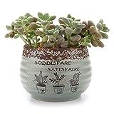 T4U 9.5CM Série d'antique /plante Succulente/Plante en Pot/Cactus/Pot De Fleur/jardinière/Cultiver