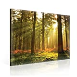 Tapeto Leinwandbild Sonnenschein im Wald - XL - 80 x 80 cm - Komplettpaket! - fertig gerahmt und inklusive Aufhängung - hochwertige 230g/m² Leinwand auf Keilrahmen - kinderleichte Anbringung