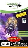 Wildlife World Top 10 Wildblumen-Saatmischung für einzelne Bienen
