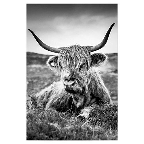 artboxONE Poster 90x60 cm Tiere Highland Cow B/W hochwertiger Design Kunstdruck - Bild Tiere von WArtDesign