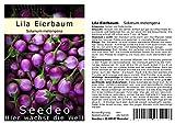 Seedeo® Lila Eierbaum (Solanum melongena) 20 Samen