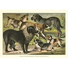 Henry J. Johnson – De Johnson Razas de perros III Artistica di Stampa (33,02 x 24,13 cm)