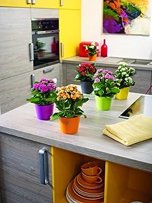 Soendgen Keramik Blumenübertopf, Dallas Esprit von Soendgen Keramik - Du und dein Garten