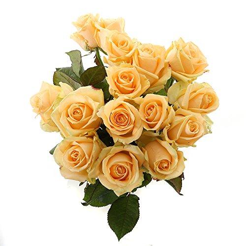 Choice of Green - 1 bouquet d?avalanche de pêche à la rose moyenne - 12 tiges - Hauteur cm 60 cm -