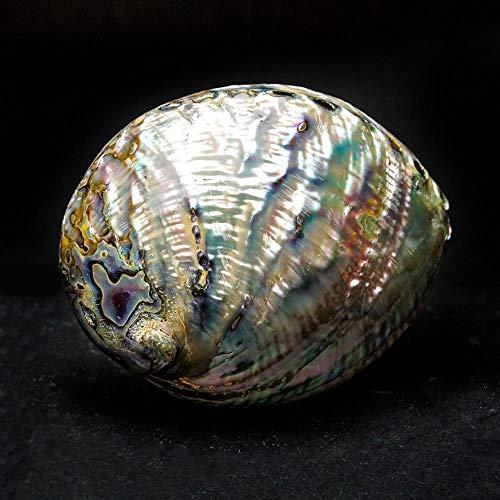 Astro Gallery of Gems Abalone-Muschel, glänzend, 117,6 g