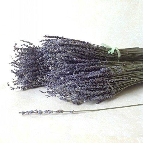 Lungo orecchio Regno Unito Blu Lavanda Naturale Fiori Secchi Bouquet Flores decorativo composizioni floreali Home Decor Viola 50g/125g/250g, purple, 250