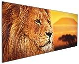 Wallario Küchenrückwand aus Glas, in Premium Qualität, Motiv: Prächtiger Löwe in der Savanne | Spritzschutz | abwischbar | Pflegeleicht