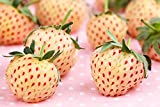 Weiße Ananas-Erdbeere 2 Töpfe
