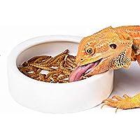 Ocamo Tazón Anti-Escape para Mascotas, Contenedor de forraje Vivo, Food Bowl Pet Lizard Plastic Worm (Medio)