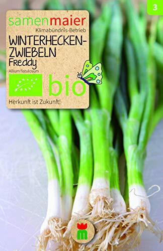 BIO Zwiebeln, Winterhecken-, Freddy (Allium fistulosum)