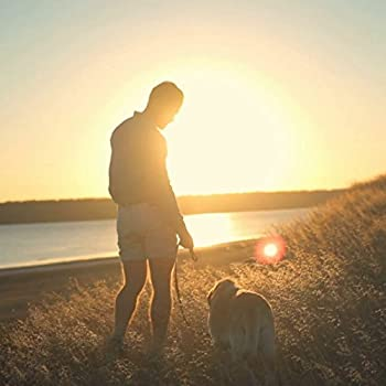 Fukkie 1,5m Starke Hundeleine Mit Gepolsterten Griff, Hundekotbeutel Und Beutelspender, Reflektierende Premium Hundeleine Für Kleine Und Große Hunde, Grün 6
