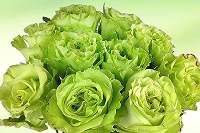 10 grüne Rosen - langstielig und vasenfertig von Blumenversand Rosenbote bei Du und dein Garten