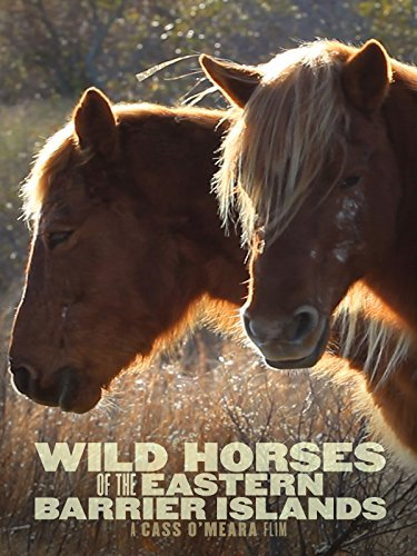 Wild Horses of the Eastern Barrier Islands