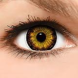 Linsenfinder Lenzera Circle Lenses braune 'Circle Brown' ohne und mit Stärke + Kombilösung + Behälter Big Eyes farbige Kontaktlinsen