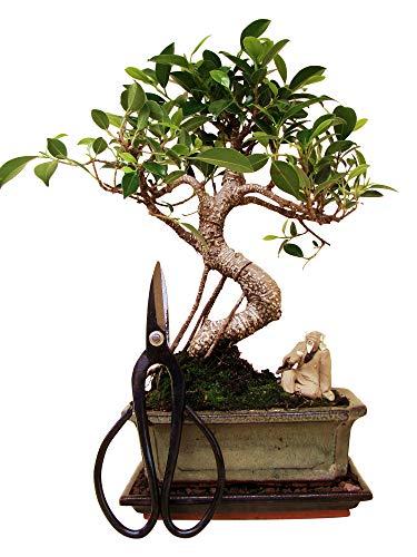 Bonsai handbemalt Bonsai