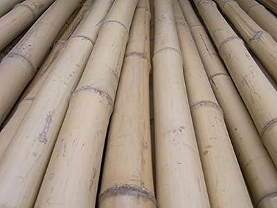 10 x Bambusrohr Bambusstange Bambushalm Bambus Bambusrohre 10 x 1-2 x 2 m / 10 - 20 mm von Bambus-Internethandel Leipzig - Du und dein Garten