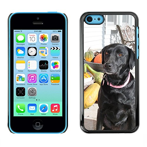 Grand Phone Cases Bild Hart Handy Schwarz Schutz Case Cover Schale Etui // M00142163 Hunde Fall-Herbst-Haustiertier, Welpe // Apple iPhone 5C (5c Welpe Fall Iphone)