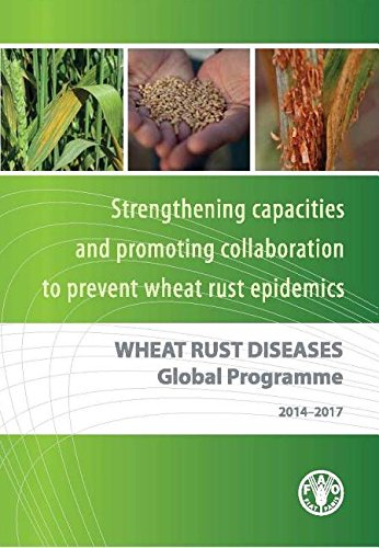 wheat-rust-diseases-global-programme-strengthening-national-capacities-to-prevent-wheat-rust-epidemi