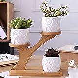 Seasaleshop Blumentopf Sukkulenten Keramik Töpfe Weiß Kaktus Pflanze Töpfe Mini Blumentöpfe mit Bambusregal 2 Stücke Set by