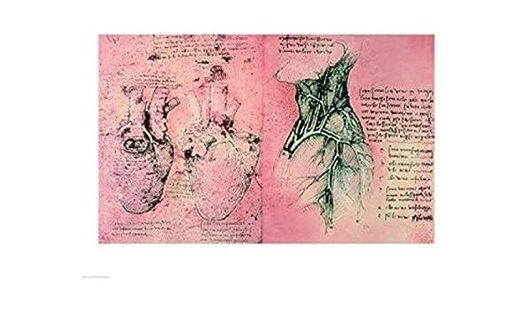 Amazon.de: Leonardo Da Vinci - Anatomische Zeichnung der Herzen und ...