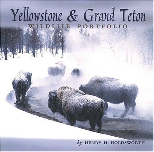 Yellowstone & Grand Teton Wildlife Portfolio by photography by Henry H. Holdsworth (2003-06-01)