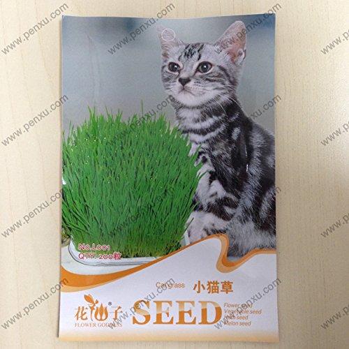 1bag = 500pcs gazon gazon Semences de l'herbe rare graines fraîches vert tendre gazons pour une utilisation à la maison et le jardin cadeau propre enfant de l'air