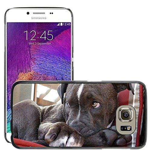 Nur Handy HOT STYLE HANDY PC Hard Case Cover//m00139995# Pitbull Welpe # Watching Hund Hunde//Samsung Galaxy S6(passt nicht für S6Edge)