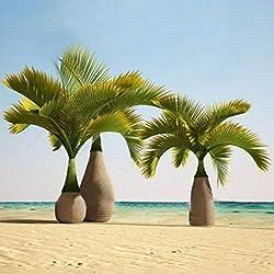 KINGDUO 20 Pcs Exotisch Flasche Palm Samen Bonsai Tropischen Baum Pflanze Samen Ziergarten Pflanzen-Grün